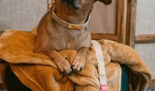 Why Choose Pink Papyrus For Pet Accessories
